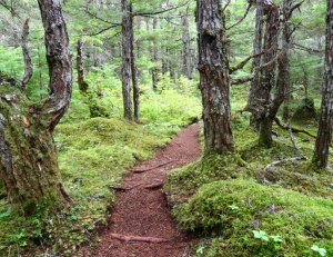 Alaska Forest Trail
