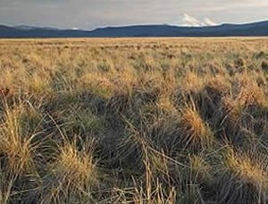 Butte-Valley-National-Grassland, California