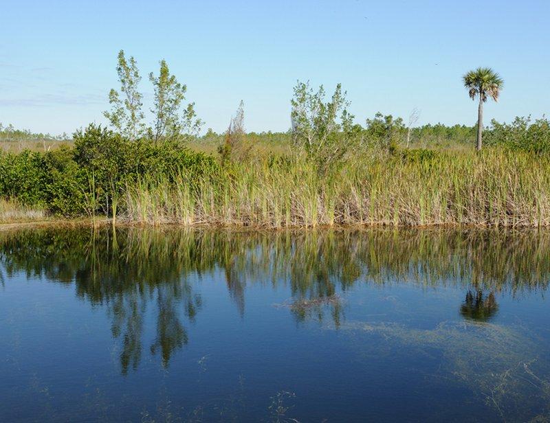 Everglades National Park. Everglades National Park