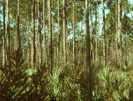 Everglades National Park, Homestead, FL