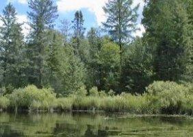 Forest Service Wilderness, Wisconsin