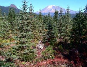 Gifford Pinchot National Forest, Washington