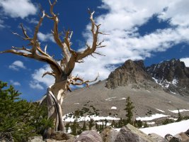 Great Basin National Park, in east-central Nevada near Utah border