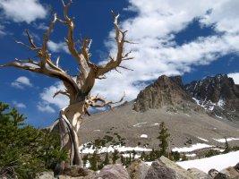 Great Basin National Park, in east-central Nevada near Utah border