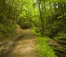 Tennessee's Great Smoky Mountains National Park