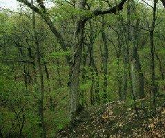 Green Forest, Illinois