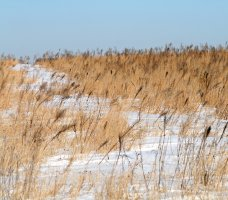 Iowa Prairie