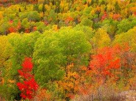 Laurentian Divide Recreation Area, Virginia, Minnesota