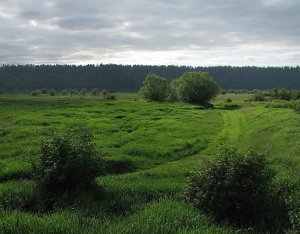 Nisqually Delta Natural National Monument, located in the Nisqually National Wildlife Refuge, southern Puget Sound region.