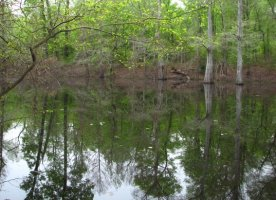 Delta National Forest, Sharkey County, western Mississippi