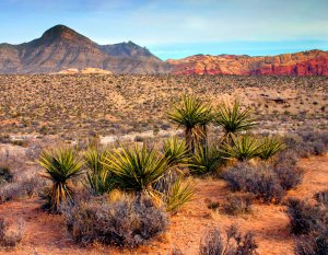 Red Rock Canyon National Conservation Area, Nevada