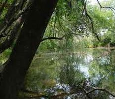 Santa Ana Wildlife Refuge, along banks of Rio Grande in Hidalgo County, Texas south of Alamo