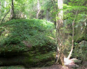 The Dismals Canyon Natural National Monument, located 12 miles south of Russellville, in Northwest Alabama