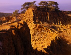 Torrey Pines State Reserve Natural National Monument, located in the California community of La Jolla, near San Diego